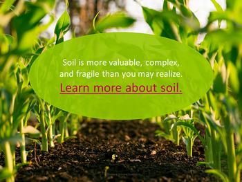 Environmental Science: Desertification Webquest (Environment/Ecology)