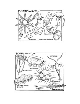 Design Your Own PLANKTON Activity