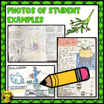 Design a Plant Activity