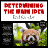 Determining the Main Idea in Nonfiction:  Red Pandas