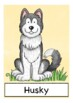 Deutsch: Hunde / dogs Bildkarten DAF, German flash cards, Wortschatz, picture