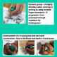 Developing a Fine Motor Program for Classroom or Therapy