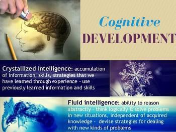 Development Lecture Bundle- AP Psychology
