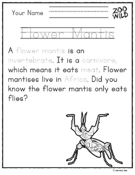 Devil's Flower Mantis -- 10 Resources -- Coloring Pages, Reading & Activities