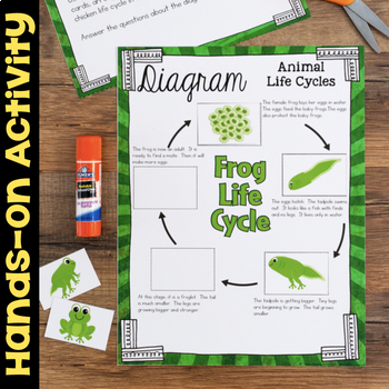 Diagram Animal Life Cycles - Science Station