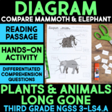 Diagram Woolly Mammoth & Elephant Structures - Plants & Animals Long Gone