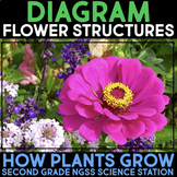 Diagram Flower Structure and Function - Second Grade Science Stations