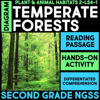 diagram temperate forest habitats second grade science stations rh teacherspayteachers com Temperate Rainforest Diagram diagram of deciduous forest