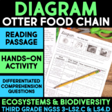 Diagram Otter Ecosystem Food Chain - Ecosystems and Biodiversity Science Station