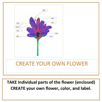 Diagram of Flower Parts