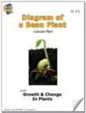 Diagram of a Bean Plant Lesson Plan