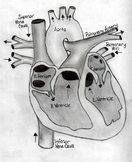 Diagram of a Heart