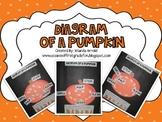 Diagram of a Pumpkin