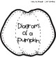 Diagram of a Pumpkin - Label the Parts (Inside and Outside of Pumpkin)