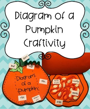 diagram of a pumpkin label the parts (inside and outside of pumpkin) Painted Pumpkins
