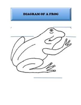 Diagram of a frog