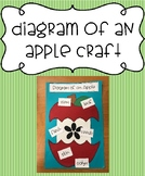Diagram of an Apple Craft - Label the Parts
