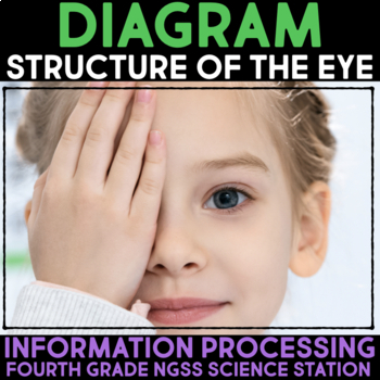 Diagram the Structure of the Eye - Information Processing