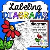 Labeling Diagrams Printables