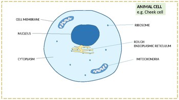 Diagrams of the parts of an animal and plant cell
