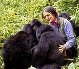 Dian Fossey - A Short Biography