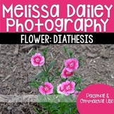 Diathesis Photograph {Bunch}