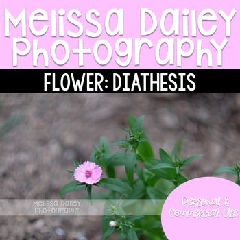 Diathesis Photograph {Single Flower}