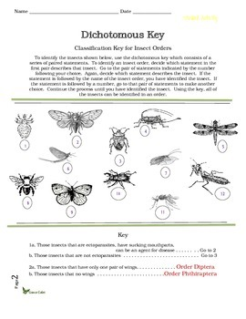 insect dichotomous key worksheet calleveryonedaveday. Black Bedroom Furniture Sets. Home Design Ideas