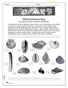 Dichotomous Key: Classification Key for Shells of Mollusks by ...