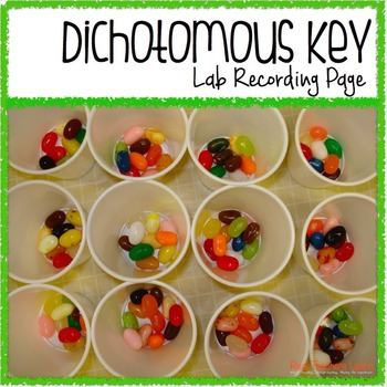 Dichotomous Key Lab Recording Sheet