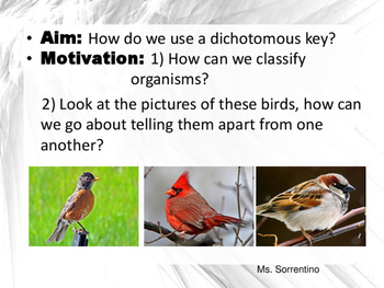 Dichotomous Key Lesson Bundle (New and Improved)