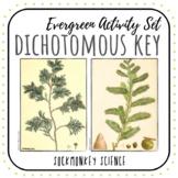Dichotomous Key Worksheets: Tree Identification Lab and Ke