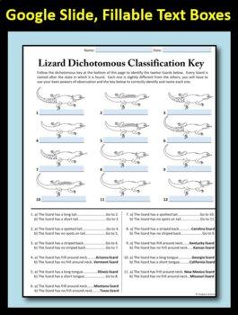 Dichotomous Key for Lizards - 1 Page No Prep Printable