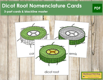 Dicot Root Nomenclature Cards