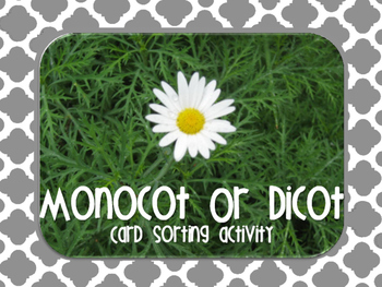 Monocot or Dicot Flower Sorting Cards {Hands On}