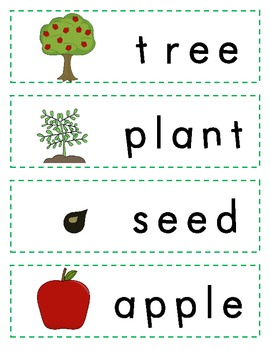 Did You Know?  A Tree Is a Plant! Vocabulary Resource