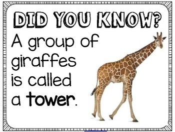 Did You Know Fun Facts For Your Classroom Animal Group Names Tpt
