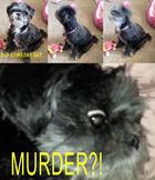 Did someone say...MURDER?!