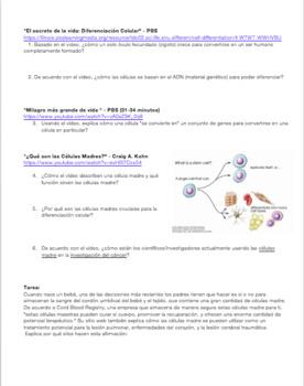 Diferenciación Celular y Célula Madre