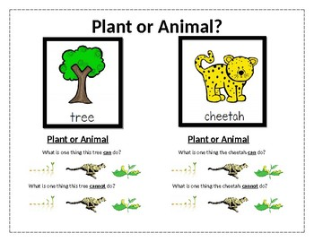 differences between plants and animals by yocelyn maria tpt