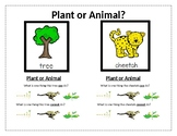 Differences Between Plants and Animals