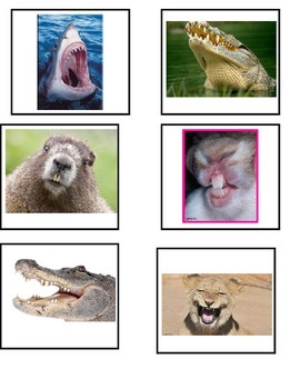 Different Animals and their Teeth