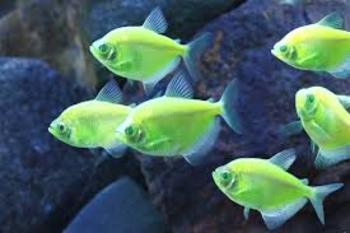 Different Types of Fish and their Adaptations