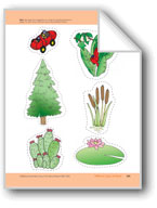 Different Types of Plants: Storyboard Pieces