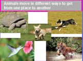 Different ways that animals move/ animal actions