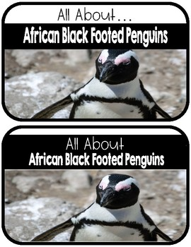 Differentiated African Black Footed Penguin Research Books