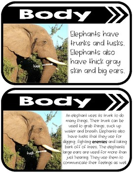 Differentiated African Elephants Research Books