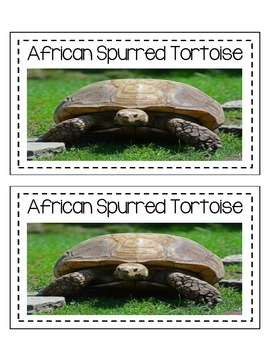 Differentiated African Spurred Tortoise Research Books