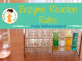 Enzyme Lab