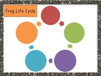 Differentiated Frog Life Cycle Interactive Activities